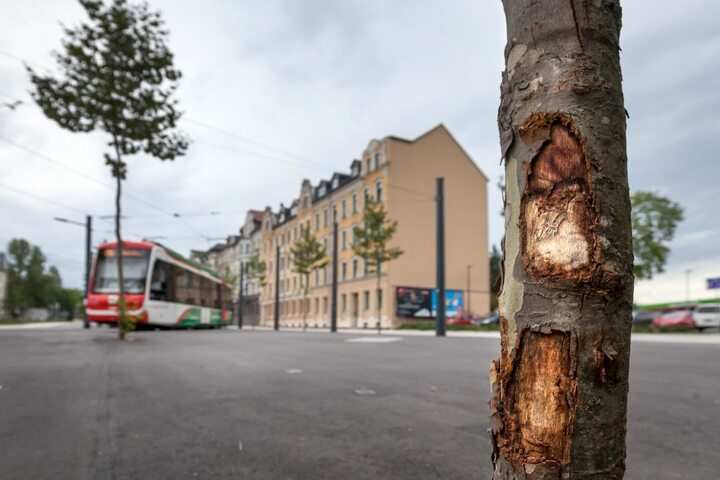 Ohne Grenzen geht es doch nicht immer: Autofahrer haben vier neu gepflanzte Bäume auf dem Stadlerplatz touchiert.