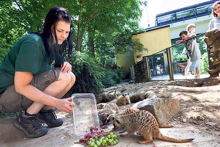Wie süß: Theresa Böhme (29) fütterte die Erdmännchen im Tierpark.