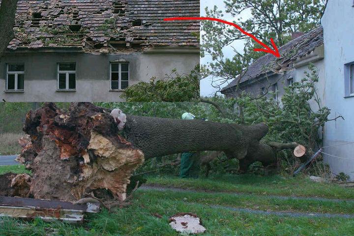Sturmtief Xavier hinterlässt auch in der Oberlausitz Spuren. In Brauna bei Kamenz fiel ein Baum in ein Dach. Der 20 Meter lange Baum beschädigte dabei den Dachstuhl erheblich.