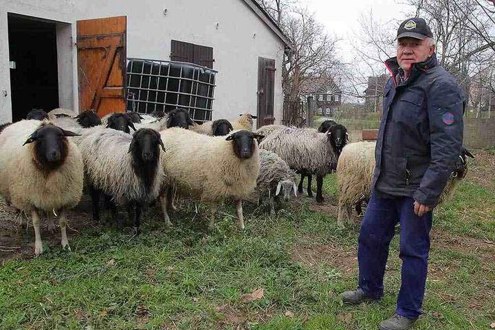 Schäfer Wilfried Urban (68) hält die einzige Karakulschaf-Herde in Sachsen.