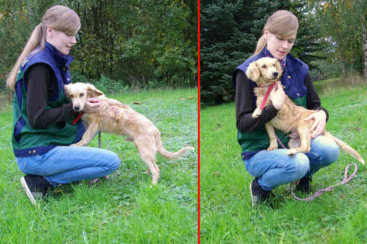 Der kleine Theo hat die schwere Krankheit überstanden und erholt sich nun gerade im Tierheim.