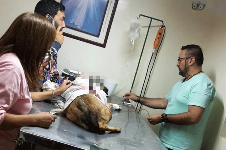 Ärzte versuchten das Tier zu retten.