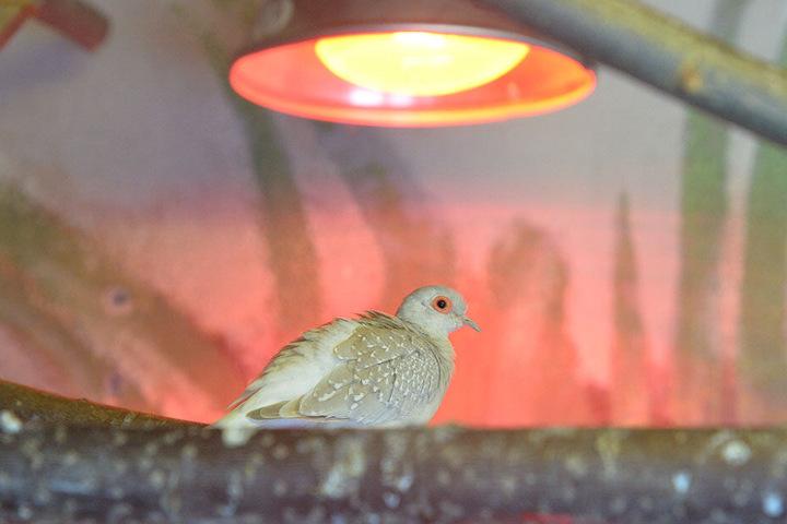 Im Zoo der Minis gibt's Heizungen und Rotlichtlampen in den Gehegen.