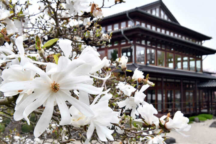 Die japanische Kultur kann man in Erfurt kennenlernen.