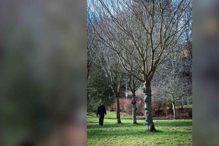 Siehe da, wie wächst: Seit zehn Jahren gedeihen Walnussbäume im Stadtpark.