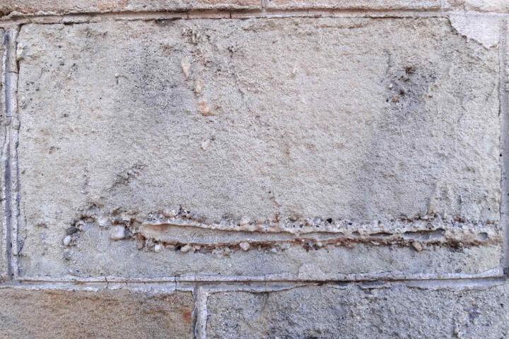 Das Bild vom Januar 2016 zeigt Fossilien an der Wand eines modernistischen Gebäudes in Barcelona