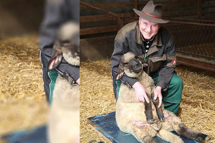 Eine schlanke Linie verlängert das Leben: Schafzüchter und Verbands-Chef Detlef Rohrmann (58) wiegt jedes Lamm und schaut, ob es als Osterlamm taugt.