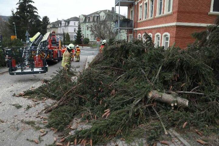 Stück für Stück musste die Kameraden der Freiwilligen Feuerwehr den Baum abtragen.