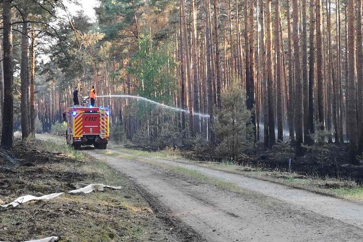Feuerwehrleute stehen auf einem Einsatzfahrzeug der Feuerwehr, und spritzen Wasser auf Glutnester in einem Wald bei Jüterbog.