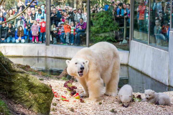 Der Tierpark Hellabrunn plant für den Sommer 2019 schon das nächste Highlight. (Archivbild)