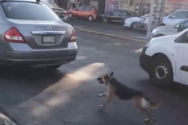 Gezielt lief der verzweifelte Hund dem Fahrzeug hinterher.