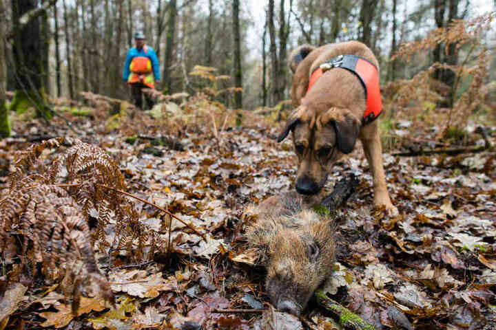 Auch mit Hunden wird mittlerweile nach den Kadavern gesucht.