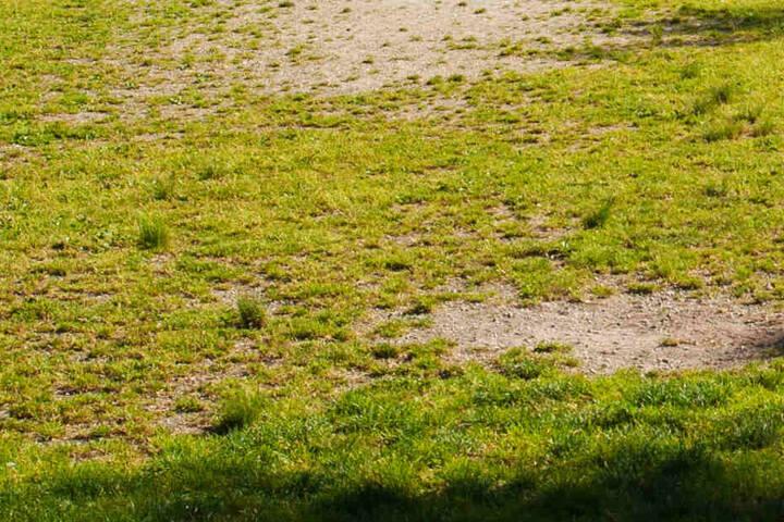 Ein schlechter Rasen ist nicht nur sportlich gesehen eine echte Qual, er stellt tatsächlich auch ein Gefahr für die Gesundheit der Spieler dar! (Symbolbild)