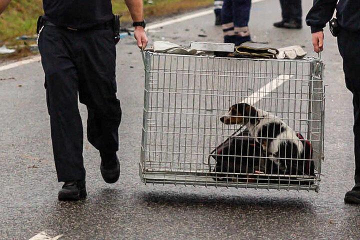 Der Hund der 27-Jährigen wurde von der Feuerwehr in ein Tierheim gebracht.