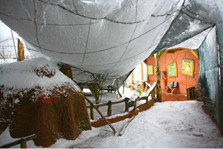 Die Schneemassen drückten die gespannten Vogelnetze nach unten, Stützpfähle knickten um wie Streichhölzer.
