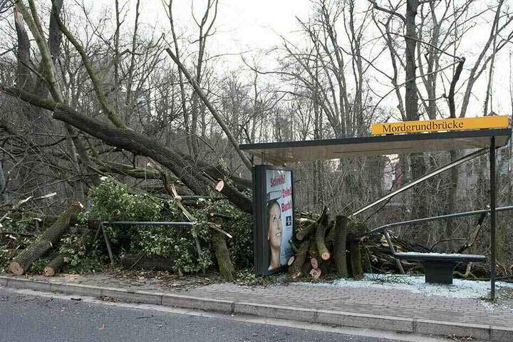 Ein umgestürzter und zerschnittener Baumstamm liegt nach dem Sturmtief Eberhard in einer Haltestelle der Dresdner Verkehrsbetriebe (DVB).