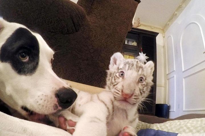 """Auch Hund """"Leon"""" hatte die Babys schnell ins Herz geschlossen."""