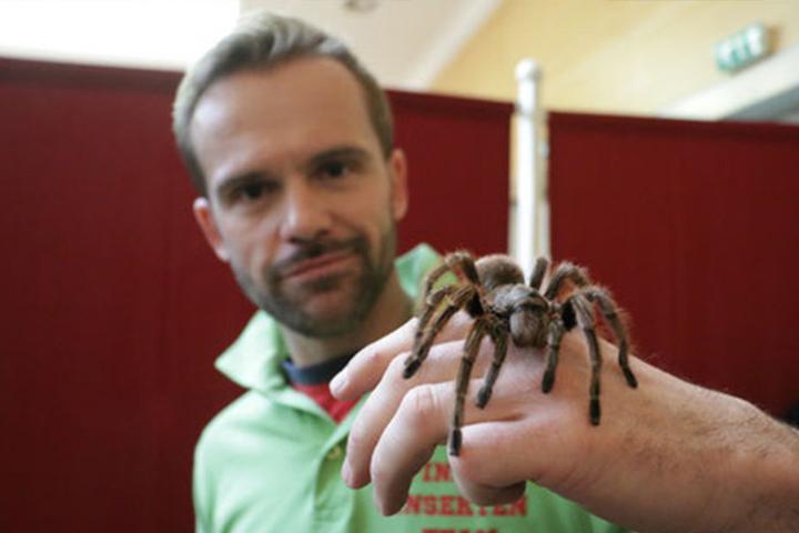 Wer mutig genug ist, kann die Spinnen sogar auf der Hand krabbeln lassen.