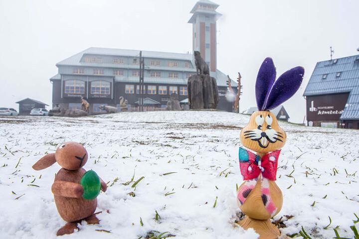Bei Schnee und Temperaturen um den Gefrierpunkt muss sich der Osterhase im Erzgebirge warm anziehen.
