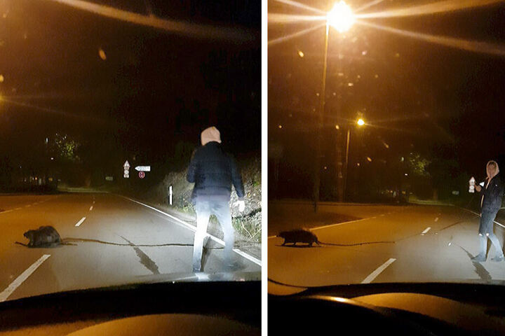 Die Bilder aus einem Video zeigt den 19-jährigen Alexander Oswald, der einem Biber über die Straße hilft.