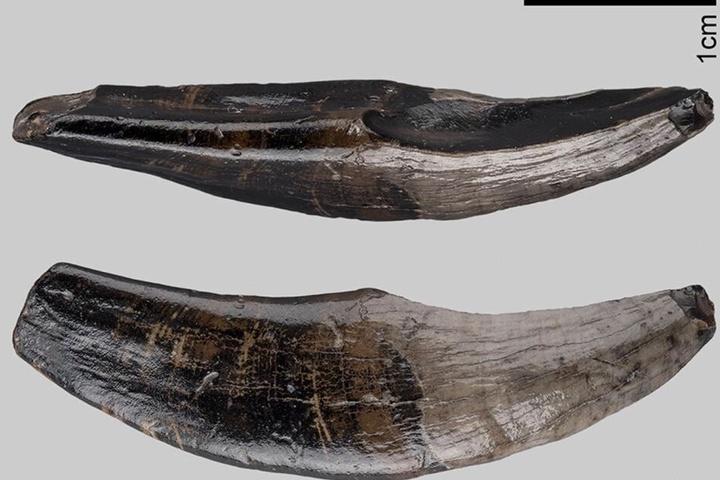 Diese Knochen wurden im Meer gefunden.