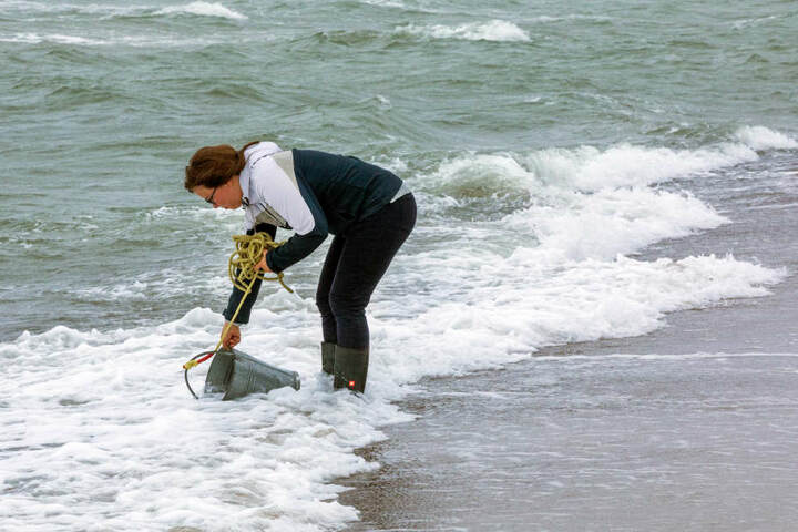 Am Strand von Warnemünde nimmt eine Mitarbeiterin des Leibnitz-Instituts eine Wasserprobe.