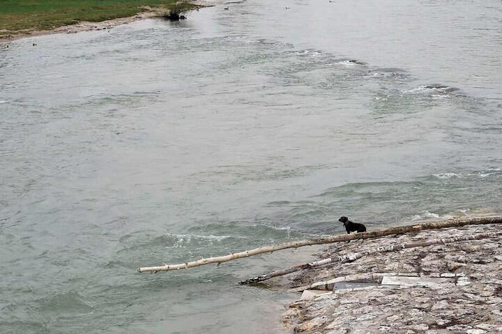 Aus eigener Kraft schaffte es Hündin Mia nicht mehr ans Ufer.