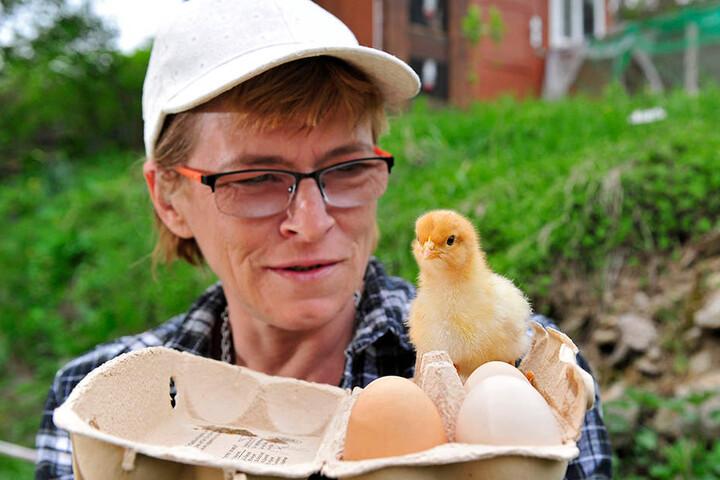 Ein Küken im Bio-Ei von Aldi?  Anja Püschmann (50) aus Witzschdorf behauptet, ein solches ausgebrütet zu haben.