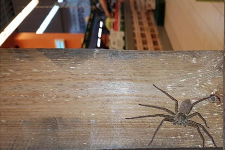 Das Tier besaß einen Durchmesser von 10 Zentimetern.