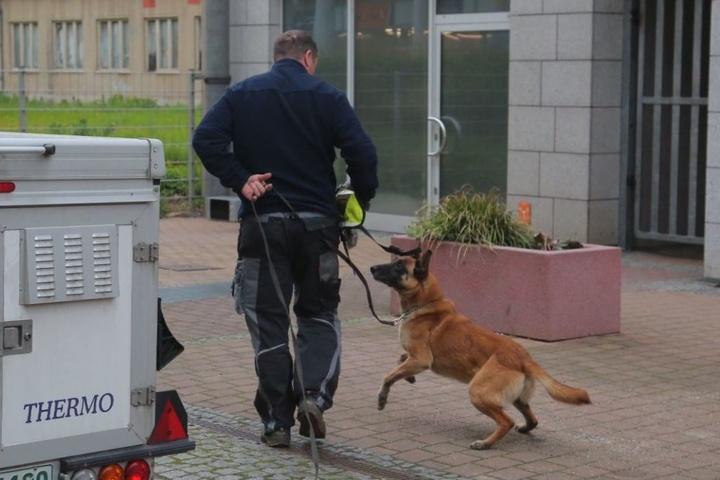 Auch Leichen- und Blutspürhund Cherry ist am Tatort eingetroffen.
