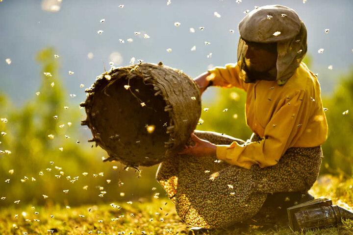 Hatidze und die Bienen: eine grandiose Geschichte über das friedliche Zusammenleben von Mensch und Tier.