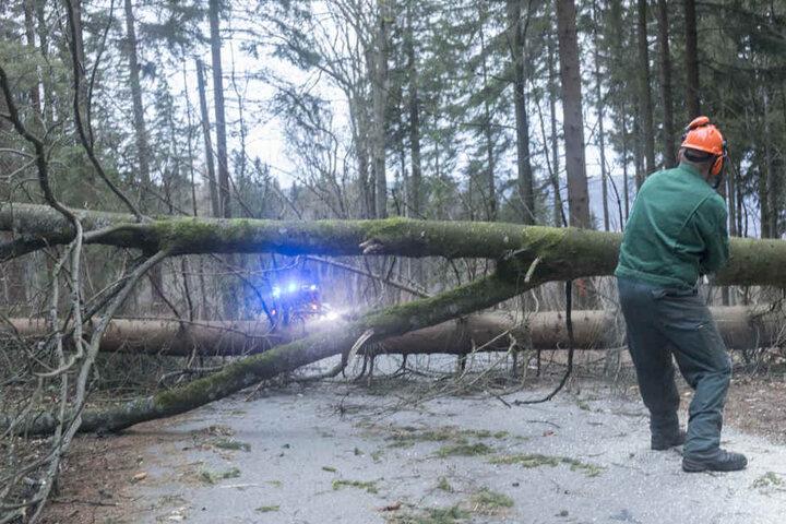 Mehrere Bäume stürzten durch den Sturm um.