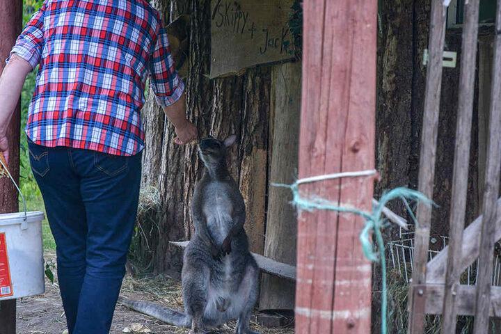 Liebevoll kümmert sich die Hobbyzüchterin um ihre Tiere im Süden von Magdeburg.