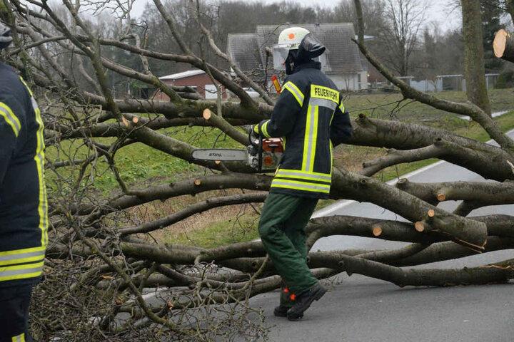 Die Feuerwehr hatte mit vielen umgestürzten Bäumen zu tun.