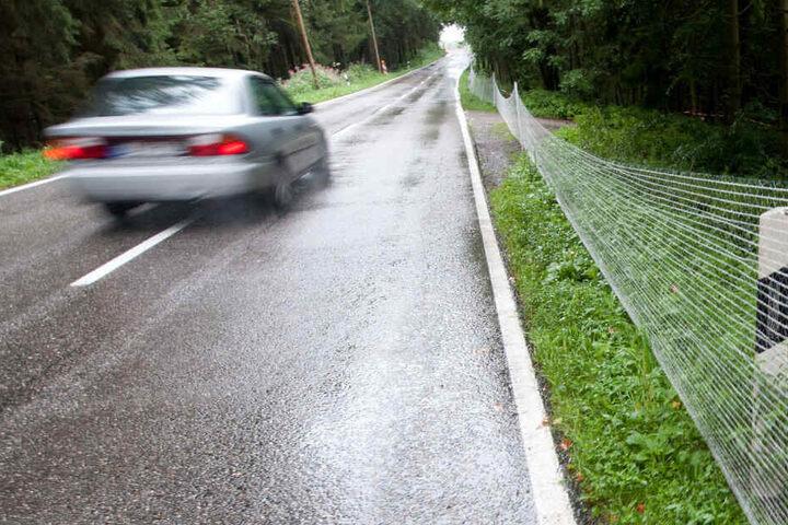 Ein Autofahrer konnte dem seltenen weißen Reh nicht mehr rechtzeitig ausweichen. (Symbolbild)