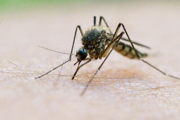 Mit einem Mückenstich beginnt das große Jucken (Symbolfoto).