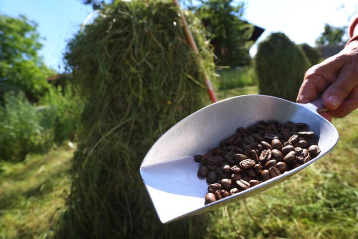 Neben den Gerüchen von Wald, Wiese und Heu können Touristen es etwa auch Kaffee-Aroma erleben.