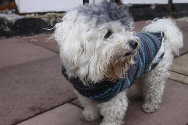Der schwarzfahrende Hund wurde in Bielefeld von der Bundespolizei aufgegriffen und mit Wurstbroten versorgt. Inzwischen ist er zurück bei seinem Besitzer.