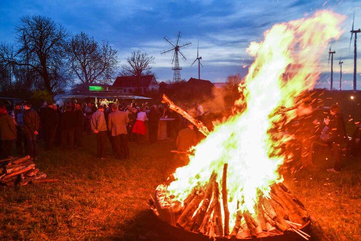 Das Knut-Fest ist eine Tradition.