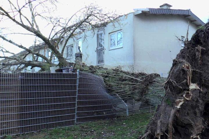 Im Wittenberger Weg wurde das Dach eines Wohnhauses durch einen entwurzelten Baum in Mitleidenschaft gezogen.