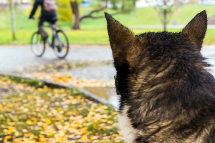 Einer der Hunde brachte den Radfahrer zu dem tödlichen Sturz. (Symbolbild)