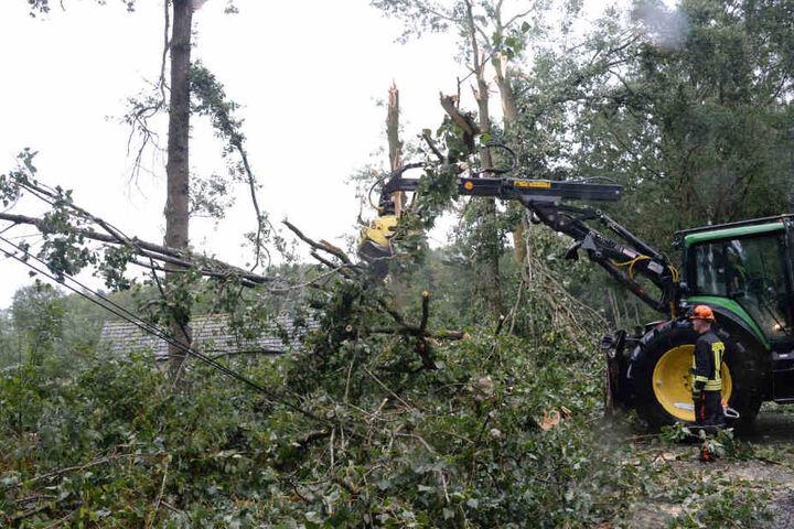 In Gütersloh mussten mehrere Bäume nach dem Sturm gefällt werden.