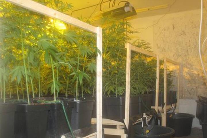 Rund 100 Kübel mit Pflanzen fand die Polizei in dem Haus.