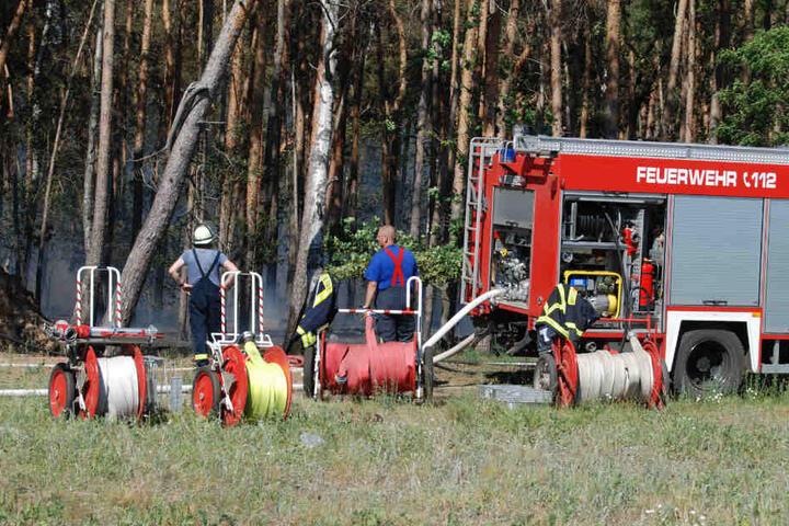 Etwa 2000 Quadratmeter des Waldes standen in Flammen, die Feuerwehr konnte das Feuer zügig löschen.