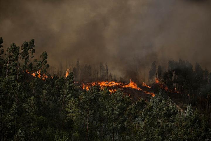 Wegen des extrem heißen Wetters mit Temperaturen von bis zu 45 Grad sind in Portugal zahlreiche Waldbrände ausgebrochen.