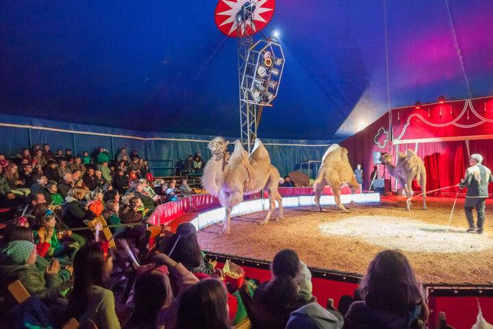 Zirkusse mit Wildtieren sollen nicht kostenlos auf dem Hartmannplatz Quartier beziehen können.