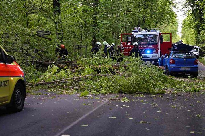 Ein riesiger Baum stürzte auf die Fahrbahn.