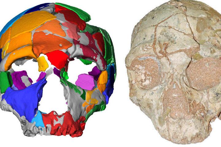 Der Apidima 2 Schädel (rechts im Bild) und seine Rekonstruktion. Apidima 2 zeigt eine Reihe von Merkmalen, die für Neandertaler charakteristisch sind und darauf hinweisen, dass es zur Neandertaler-Linie gehört.