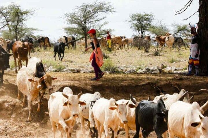 Beim Viehtreiben müssen die Bewerber ihre Teamfähigkeit unter Beweis stellen.