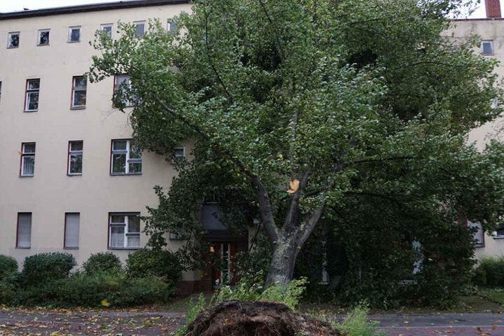 In Britz fiel ein Baum direkt auf ein Wohnhaus.